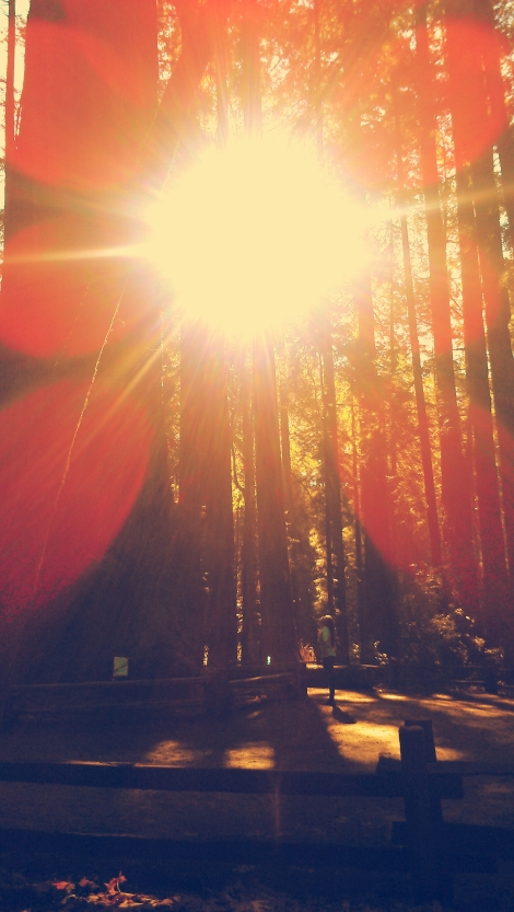 Tall trees. Bright light.